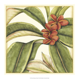 Tropical Blooms and Foliage I Premium Giclee Print by Jennifer Goldberger