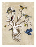 The Ornithologist&#39;s Dream II Prints by Naomi McCavitt