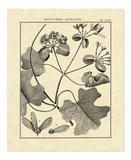 Vintage Botanical Study II Art by Charles Francois Sellier