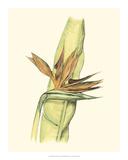 Elegant Tropics I Giclee Print by Jennifer Goldberger