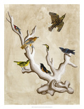 The Ornithologist&#39;s Dream III Print by Naomi McCavitt