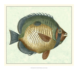 Butterfly Fish I Giclee Print