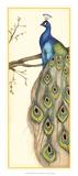 Rebecca's Peacock II Lámina giclée premium por Jennifer Goldberger