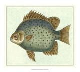 Butterfly Fish II Giclee Print