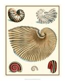 Studies in Symmetry II Giclee Print by M. Knorr