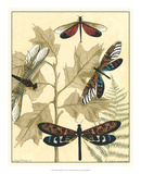 Graphic Dragonflies in Nature I Affiches par Megan Meagher