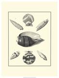 Studies in Symmetry VI Posters by M. Knorr