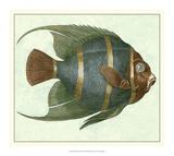 Angel Fish I Giclée-tryk