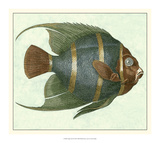 Angel Fish I Posters