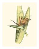 Elegant Tropics II Lámina giclée por Jennifer Goldberger
