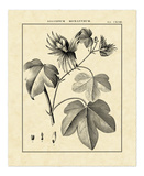 Vintage Botanical Study IV Prints by Charles Francois Sellier