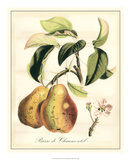 Tuscan Fruits IV Giclee Print by  Vision Studio