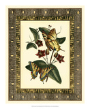 Leather Framed Butterflies I Prints by Deborah Bookman