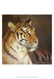 Tiger Poster von Chris Vest