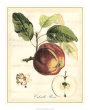 Tuscan Fruits I Posters