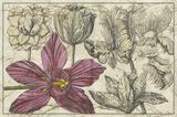 Embellished Arena Botanical IV Premium Giclee Print