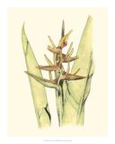 Elegant Tropics VI Giclee Print by Jennifer Goldberger