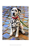 Dalmatian Puppy Prints by Robert Mcclintock