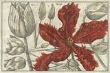Embellished Arena Botanical III Premium Giclee Print