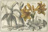 Embellished Arena Botanical II Premium Giclee Print by  Arena