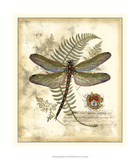 Regal Dragonfly I Giclee Print by  Vision Studio