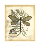 Regal Dragonfly II Giclee Print by  Vision Studio