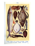 Mrs Beeton's Cookery Book - Fish Giclee Print