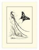 Long Tailed Hummingbird, c.1742 Giclee Print by George Edwards