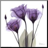 Koninklijk paars gentiaan trio Kunstdruk geperst op hout van Albert Koetsier