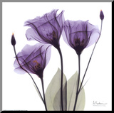 Royal Purple Gentian Trio Mounted Print by Albert Koetsier