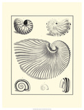 Studies in Symmetry II Prints by M. Knorr