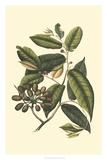 Flourishing Foliage III Giclee Print by  Vision Studio