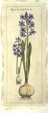 Embellished Hyacinth I Giclée-Druck von  Vision Studio