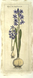 Embellished Hyacinth I Giclee Print by  Vision Studio