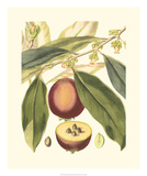 Fantastical Botanical III Giclee Print