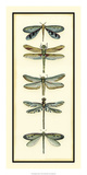 Dragonfly Collector I Posters by Chariklia Zarris