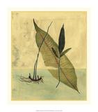 Tropical Fern II Premium Giclee Print