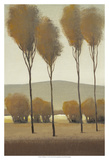 Tall Birches I Prints by Tim O'toole