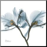 Orchids in Blue Druck aufgezogen auf Holzplatte von Albert Koetsier