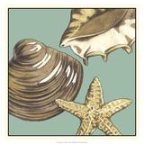 Shell Trio on Blue IV Giclée-tryk af Megan Meagher