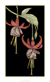 Graphic Fuchsia VI Giclee Print by Jennifer Goldberger