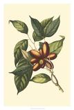Flourishing Foliage II Giclee Print by  Vision Studio