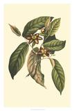 Flourishing Foliage IV Giclee Print by  Vision Studio