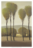 Tall Birches II Poster by Tim O'toole