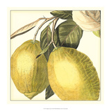 Graphic Lemon Giclée-tryk