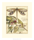 Whimsical Dragonflies I Posters
