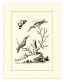 The Hummingbirds, c.1742 Prints by George Edwards