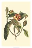 Flourishing Foliage I Giclee Print by  Vision Studio