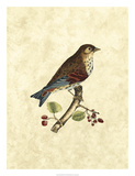 Selby Birds III Giclee Print by John Selby