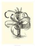 Besler Aloe Prints by Besler Basilius